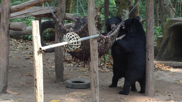 The Bear Rescue Centre - Luang Prabang