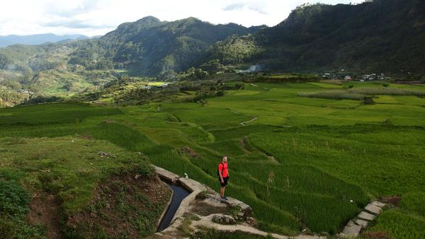 Rice fields - Sagada<
